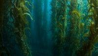 Algen-Extrakte halten Blutfette im grünen Bereich