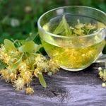Grüner Tee schützt das Gehirn