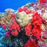 Mineralien aus dem Meer zur Stärkung der Abwehrkräfte