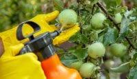 Fast alle Pestizide erreichen das falsche Ziel – uns!