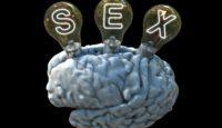 Welche Auswirkungen Sex auf das Gehirn hat